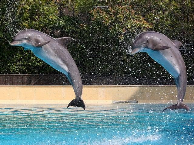 Nadando com golfinhos em Las Vegas