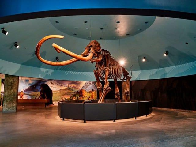 The Las Vegas Natural History Museum