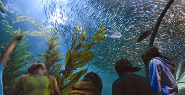 Aquarium of the Bay em San Francisco na Califórnia